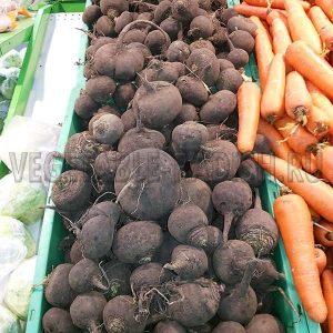 Салт из редьки с морковью