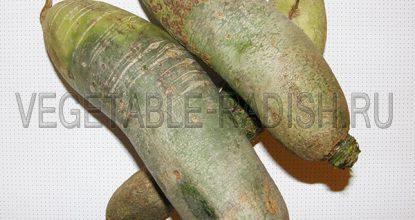Салат из зеленой редьки с морковью — варианты рецепта