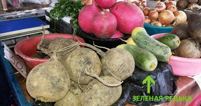 Фото зеленой маргеланской редьки